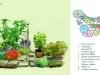 ogród ziołowy projekt, newgreen.pl