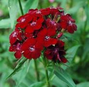 mowa kwiatów, newgreen.pl