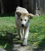 pies w ogrodzie, newgreen.pl