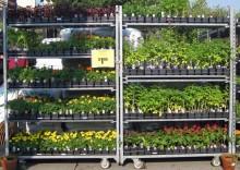 kupujemy rośliny, newgreen.pl