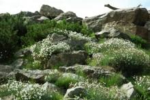 alpinarium, newgreen.pl