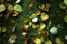 jak przygotować trawnik do zimy, newgreen.pl