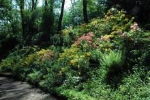 jak właściwie dobrać rośliny do ogrodu, newgreen.pl