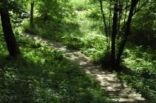 ogród leśny, negreen.pl