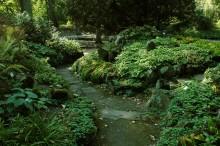 ogród skalny w miejscu zacienionym, newgreen.pl