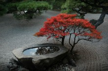 rośliny w ogrodach japońskich, newgreen.pl