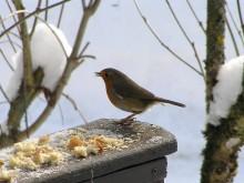 czym karmić ptaki zimą, newgreen.pl