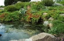 ogród skalny w sąsiedztwie oczka wodnego