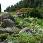 skalniak na naturalnym zboczu