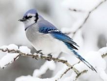 dokarmiamy ptaki zimą, newgreen.pl