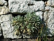 suchy murek z wyrastająca roślinką