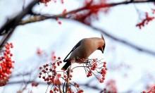 zimowe dokarmianie ptaków, newgreen.pl