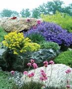 skalniak obrośnięty kolorowymi kwiatami