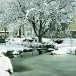 oczko wodne zimą, newgreen.pl