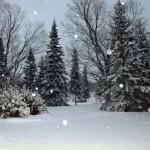 zima w ogrodzie, newgreen.pl