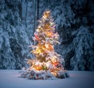 Świąteczne dekoracje ogrodu, newgreen.pl