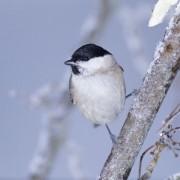 Dokarmianie ptaków zimą, newgreen.pl