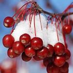 rośliny o dekoracyjnych owocach, newgreen.pl