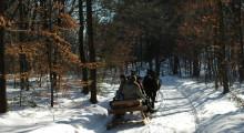 Sanie ciągnięte przez dwa konie na leśnej drodze