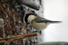 Ptak zimą przy karmniku