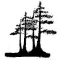 Firma grupowa sadzenia drzewek bonsai