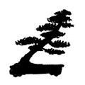 bonsai styl pochylony - shakan
