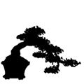 Forma bonsai półkaskadowa, jap. han-kengai