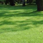 trawnik wiosną