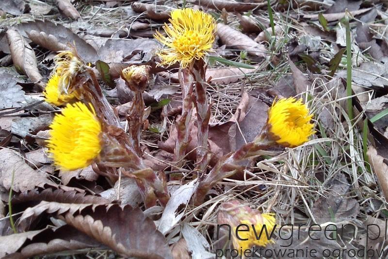 wiosenny-podbial-w-ogrodzie