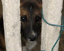 pies szuka domu