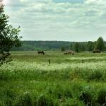 letnia łąka, newgreen