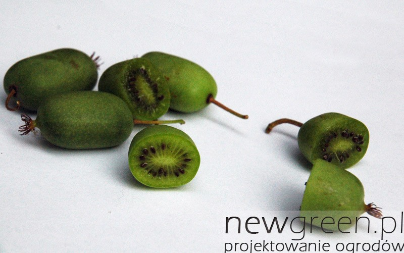 Actinidia-arguta-owoce
