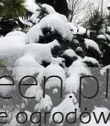 ogród zimą, newgreen.pl