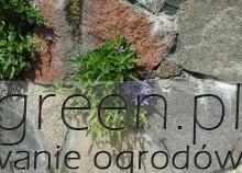 rośliny na murek kwiatowy, newgreen.pl