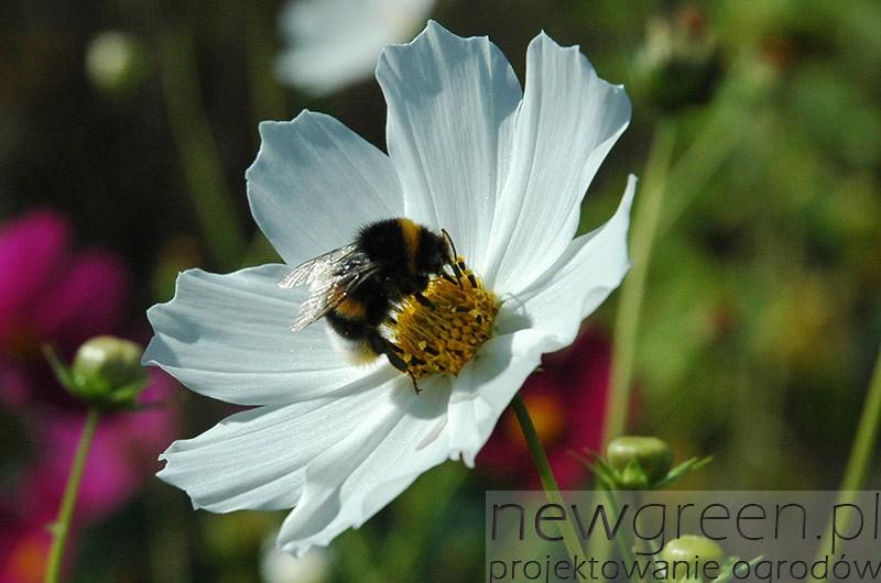 Wielki-Dzien-Pszczol