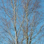 inwentaryzacje-drzewostanu