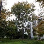 inwentaryzacja-zieleni-na-osiedlu-mieszkaniowym